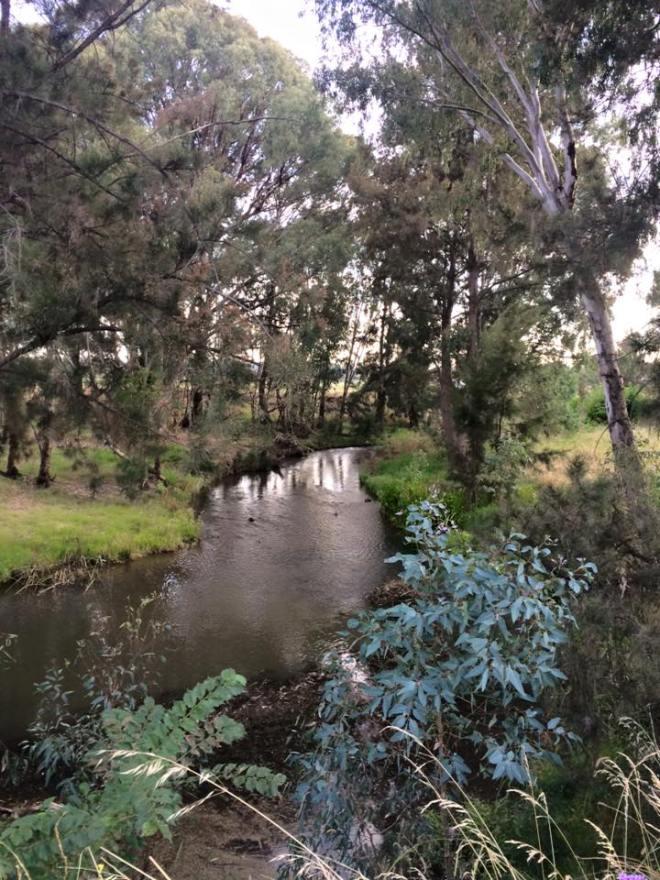 cudgegong river mornign