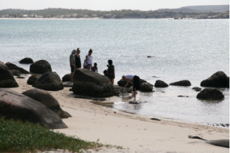 Gathering oysters on the Bawaka rocks